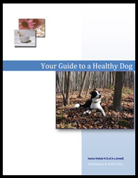 Your-Guide-to-a-Healthy-Dog